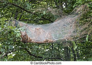 Bagworm Nest