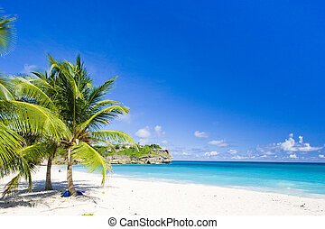 bahía, caribe, asqueroso, barbados