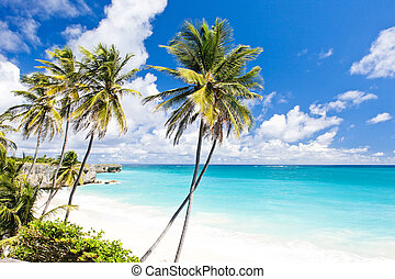 bahía, fondo, caribe, barbados