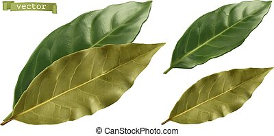 bahía, leaf., vector, 3d, realista