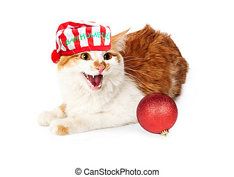 Funny photo of angry yellow and white cat hissing while wearing a Christmas night cap with the words Bah Humbug