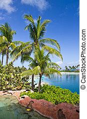 bahamas, colores, nassau