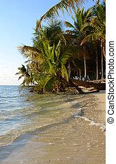 bahamas, pálma fa, óceán