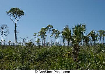 bahamas, vegetación