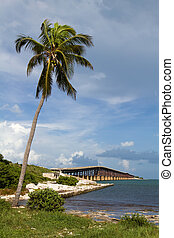 Bahia Honda Key Florida - Coconut palm tree leans out over...