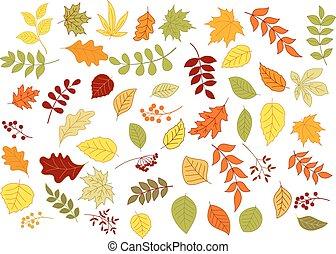 baies, graines, automnal, herbes, feuilles