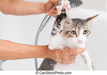 baigner, chat