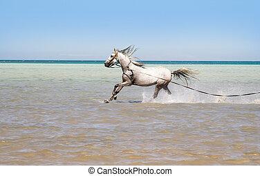 baigner, cheval