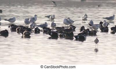 baigner, oiseaux