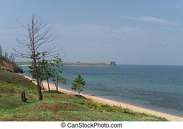 baikal, 湖, 木, 海岸