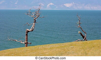 Baikal Lake. Olkhon Island. Tree with ribbons - Tree of...