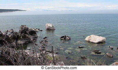 Baikal seal Pusa sibirica on Ushkany Islands. - Baikal seal...