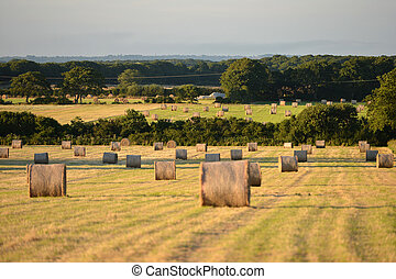 Bails - Hay bails in summer morning light, english...
