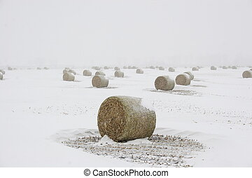 Bails of hay in blizzard - Bails of hay in the white farm...