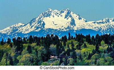 Bainbridge Island Mount Olympus Snow Mountains Olympic National Park Washington State Pacific Northwest Closeup Evergreen