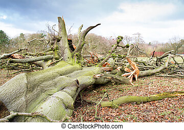 baissé, endommagé, arbre, orage