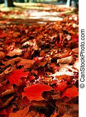 baissé, feuilles automne