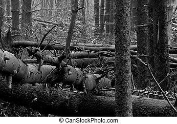 baissé, forêt
