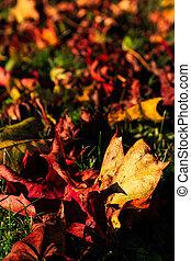 baissé, pousse feuilles