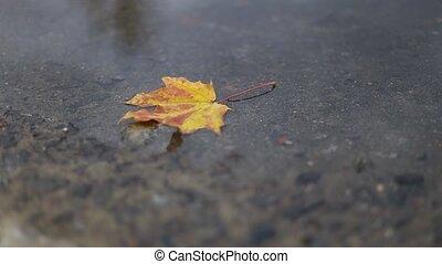 baissé, temps, automne, sélectif, foyer., feuille, jaune, ...