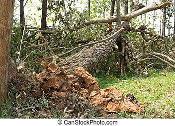 baissé, vent, endommagé, arbre, naturel, orage