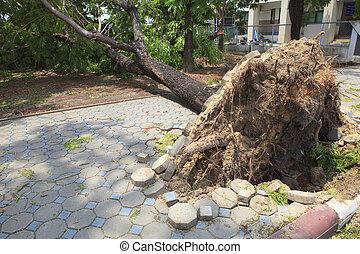 baissé, vent, marche, endommagé, arbre, naturel, manière, orage