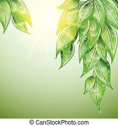 baisses eau, vert, leaves.