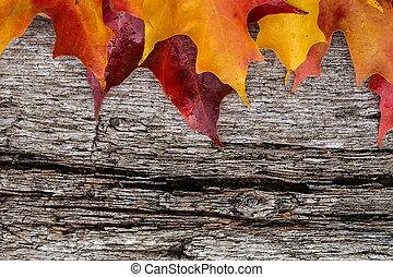 baixa licenças maple, ligado, tabela madeira