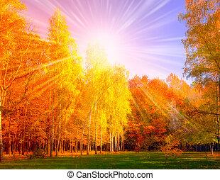 bajas, árbol, y, sol, bosque