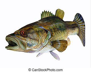 bajo, redeye, pez