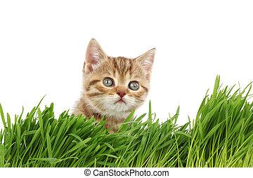 bak, gräs, katt