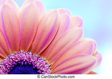 bak, närbild, blomma, solljus