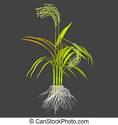 """Bakane disease from the Japanese for """"foolish seedling"""", is..."""