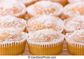 Baked cupcakes with dusting of icing sugar on top.