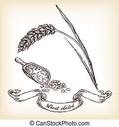 Bakery sketch.Hand drawn illustration of wheat and grain
