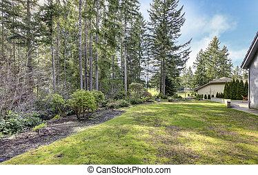 bakgård, med, furuträ träd, och, sida, av, den, house.