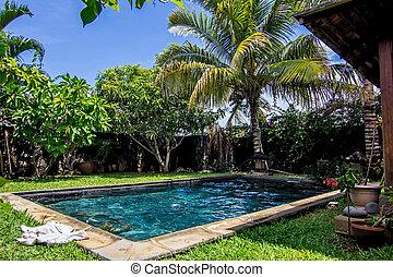 bakgård, palm, slå samman, träd, simning