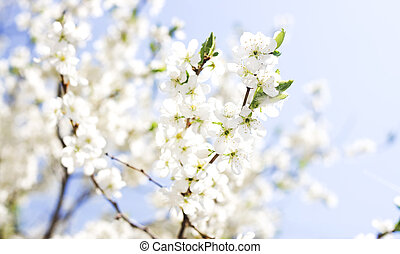 bakgrund, av, vår blommar