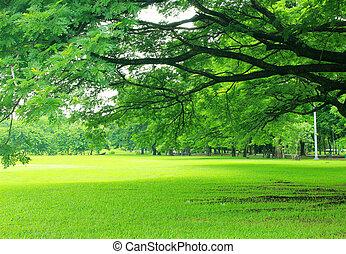 bakgrund, med, grönt träd, i park
