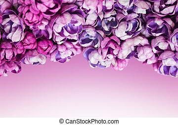 bakgrund, med, vacker, blomningen, av, lilac.