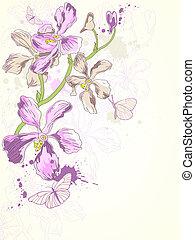 bakgrund, med, violett, orkidéer