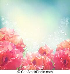 bakgrund, (peonies), ro, lysande, blomningen