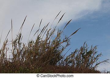 bakgrund, sky, buske