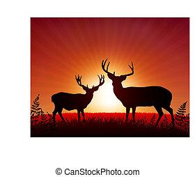 bakgrund, solnedgång, hjort