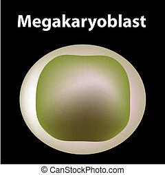 bakgrund., stam, megakaryocyte, blod, trombocyt, isolerat, ...