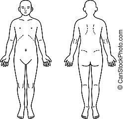 baksida, mänsklig, främre del, kropp