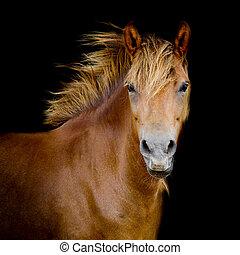 baksida, skott, av, a, häst