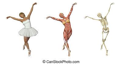 balé, overlays, -, anatômico
