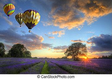 balões ar quente, voar, lavanda, paisagem, pôr do sol
