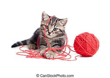 bal, tabby, clew, spelend, katje, of, rood, aardig